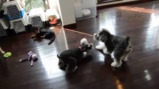犬のようちえん®白金教室 http://inunositukekyousitu-shirokane.com/ ...