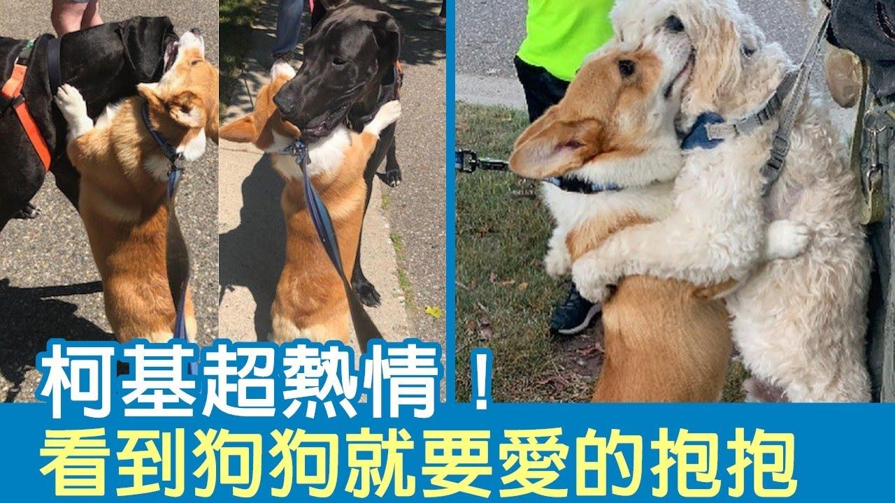 柯基超熱情!愛交朋友「看到狗狗就要愛的抱抱」 小短腿緊摟:好高興看到你   狗狗搞笑