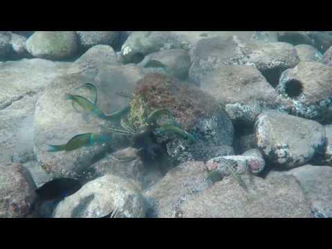 Fuerteventura Costa Calma Snorkeling