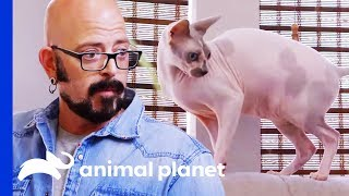 Can Jackson Convince This Woman To Make Her Home Safe For Her Cat? | Cat vs. Dog