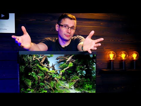 BALAZS' REVENGE -  PLANTED FISH TANK BUILD FOR REAL