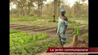 Icasi en Guine?e Bissau