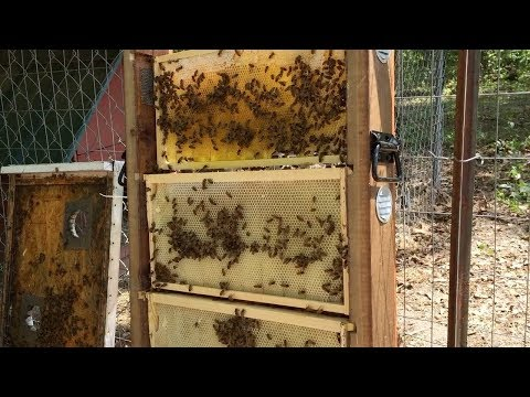 Transferring Bees Into an 8 Frame Observation Hive