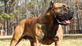 Aggressive Dog Breeds List
