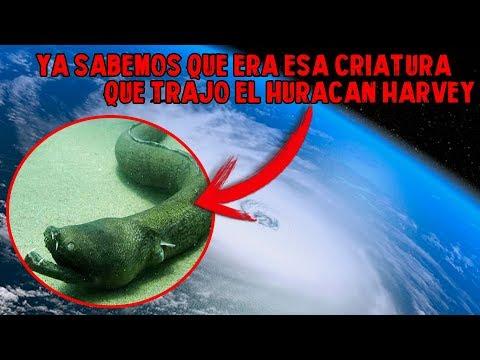 Ya sabemos que Criatura era lo que trajo el Huracán Harvey a la playa (Aplatophis chauliodus)