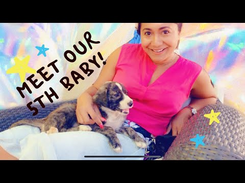Meet Our 5th Baby! Our Spanish Mastin Adoption - The Goddess Style