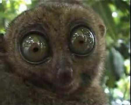Süße Tierbabys Mit Großen Augen