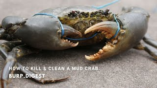 burp.digest - How to Kill / Prepare / Cook / Deshell / live Mud Crab?
