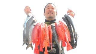 "Sakana Sniper ""Faded"" Three Prong Spearfishing Hawaii"