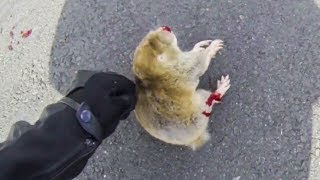 biker trying to help dying animal   bikers are nice   random acts of kidness      ep   36