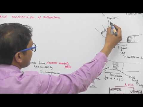 Skeletal Muscle Structure & Contraction Mechanism - Dr. Rajeev Ranjan   NEET AIIMS   Video Lectures