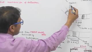 Skeletal Muscle Structure & Contraction Mechanism - Dr. Rajeev Ranjan | NEET AIIMS | Video Lectures