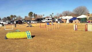 Westie Agility Adventures With Missy And Jan