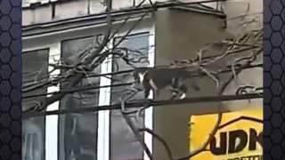 Кошка несет домой котенка в зубах