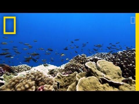 Rising Ocean Temperatures are