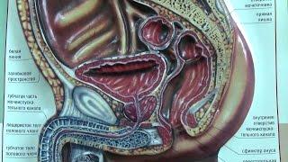 Простатиты у мужчин причины(Простатиты у мужчин, причина кроется в сидячем и малоподвижном образе жизни. Это приводит к застойному..., 2015-07-15T07:50:42.000Z)