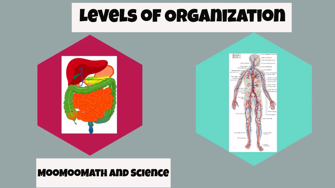 different levels of organization