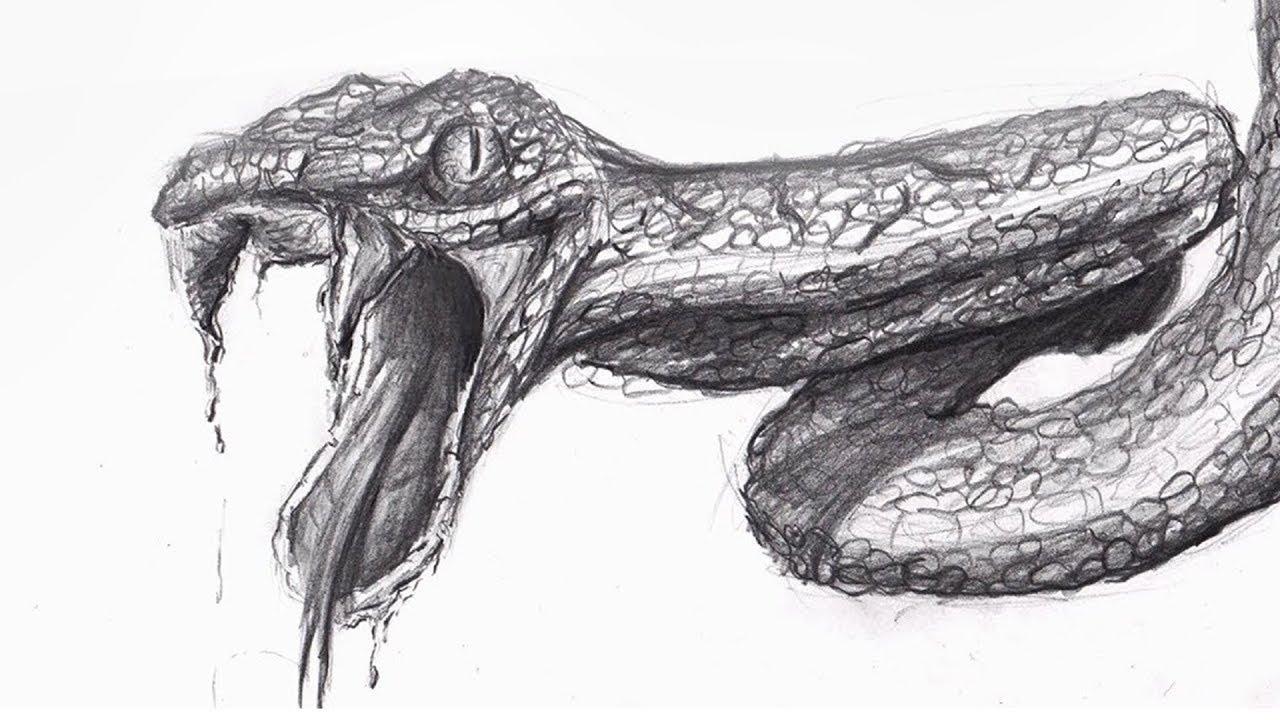 SÉRIE : Comment Dessiner... Un Serpent ? #1