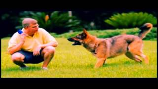 Dog Training Jacksonville Fl