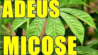 CHA DA FOLHA DA MANDIOCA PARA ACABAR COM AS MICOSES,FRIEIRAS,IMPINGE POR MARA CAPRIO