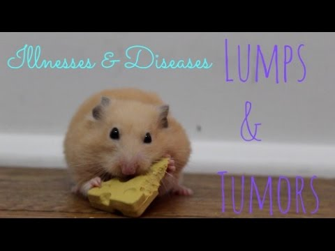 Hamster Illnesses & Diseases | Lumps & Tumors - YouTube