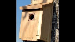 Ocoee FL Birdhouse1