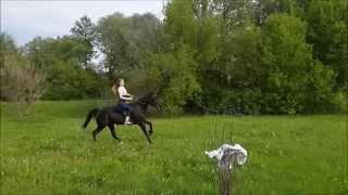 Девушка в галопе на гнедой лошади