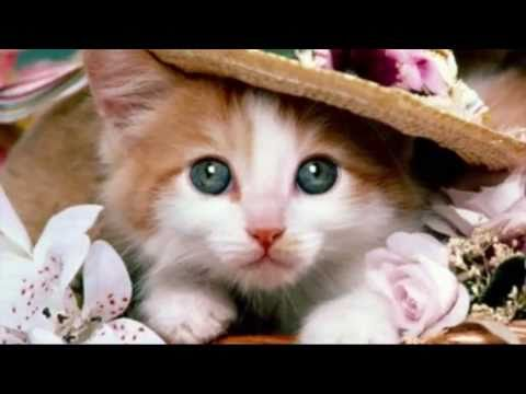 GreenvillePetCONNECT pet resources for greenville spartanburg south carolina video