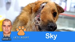 Dog With Half A Face Rescued With Hope - @Viktor Larkhill Extreme Rescue