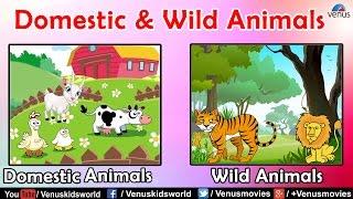 Animal Kingdom ~ Domestic & Wild Animals