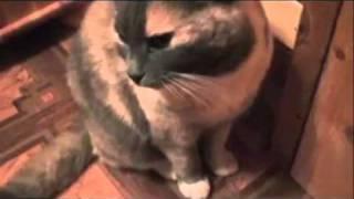 Как сделать из кошки светильник