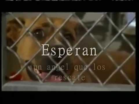Cachorros en adopción  Cerro La Ballena Santiago Chile