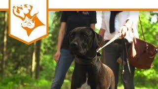 Einfach Hund Folge 4: Nicht an der Leine zerren, Amy! | Vet-Concept