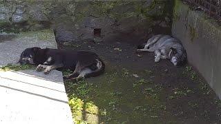 Собаки в городе. Стаи бродячих собак в Николаеве