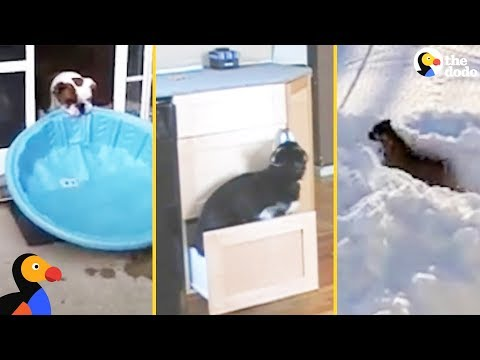 SMART Dogs Showing Off Their Problem Solving Skills | The Dodo