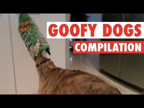 Craziest, Goofiest Dogs || Goofy Dogs Compilation