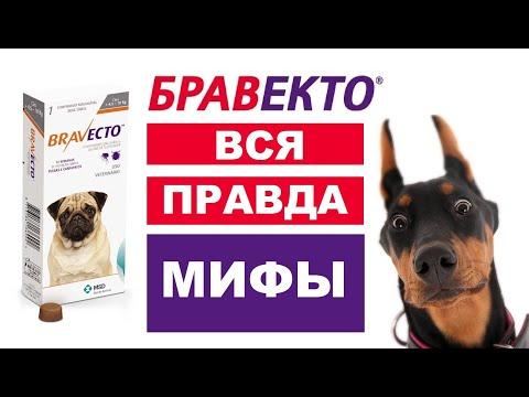 Таблетка БРАВЕКТО для собак от клещей  Правда и мифы  Инструкция