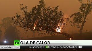 Aumentan a 25 los muertos por los incendios forestales de Australia
