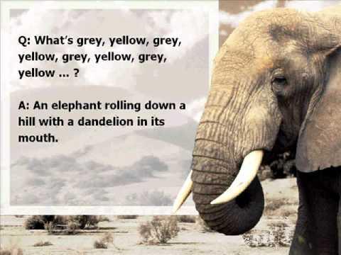Best Elephant Jokes - YouTube