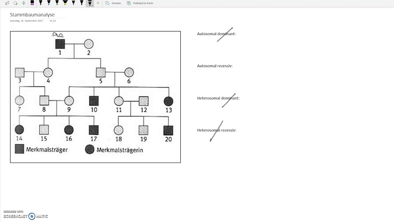 schematischer aufbau eines stammbaumes ein stammbaum. gonosomal ...