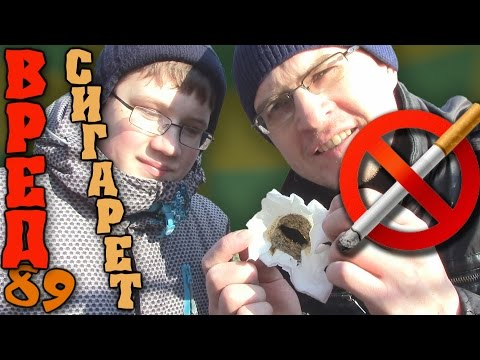 Опыт. Вред курения на организм - Отец и Сын №89