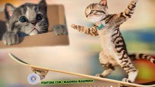 ПРИКЛЮЧЕНИЕ МАЛЕНЬКОГО КОТЕНКА - мультик для детей и малышей МИМИМИШКА мультфильм про котят #21