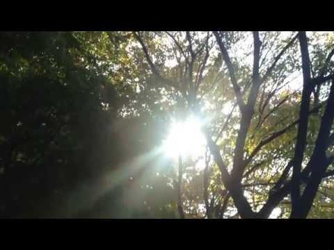 플로팅 아일랜드 Floating Island(플로팅아일랜드) - 상사화 Teaser [M/V]