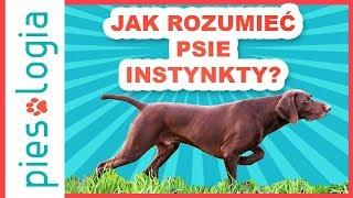 Łańcuch łowiecki, czyli jak rozumieć psie instynkty?