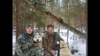 Зимняя охота на лесную куницу