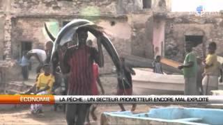 La pêche : Un secteur prometteur encore mal exploité