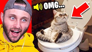 REACTING To CUTE CAT VIDEOS (io Games)