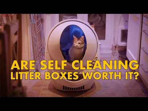 Are SELF CLEANING litter boxes WORTH IT?