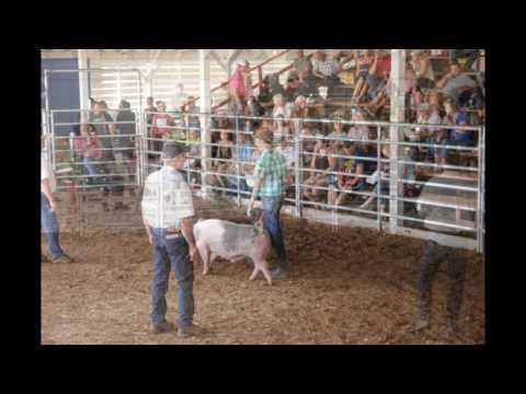 josephine county junior livestock swine