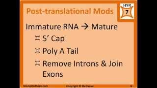 DNA Replication, Transcription, Translation, DNA Polymerase III, Topoisomerase, RNA Polymerase